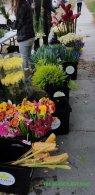 flower house 018