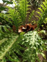 Fern from the top