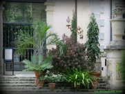 Collection of plants on the steps