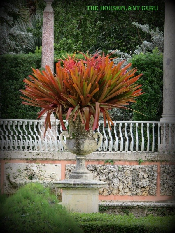 T!his urn of bromeliads was just gorgeous