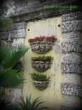 Bromeliads in the wall pockets on the shady side of the courtyard