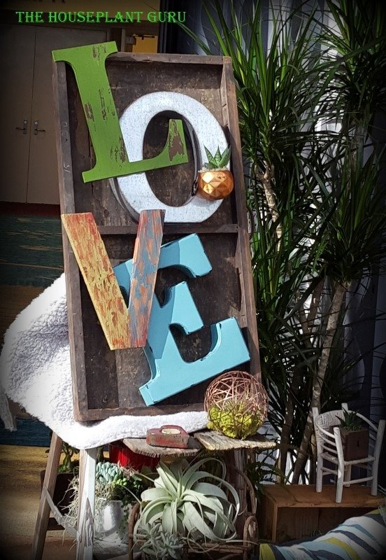 Love this love sign -Live Trends plants are used