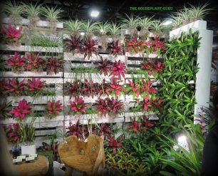 More bromeliads on pallet wall