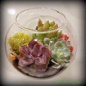 Magnetic succulent terrarium