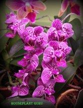 gardenia 127