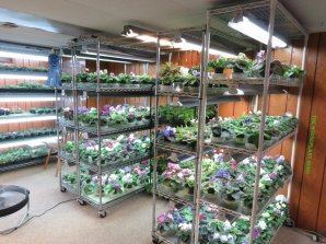 Growing racks in the plant room
