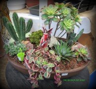 A fairy garden completely made with tender succulents and cactus.