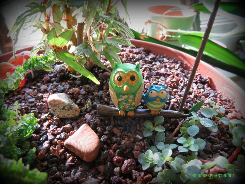 Who could resist these adorable owls?