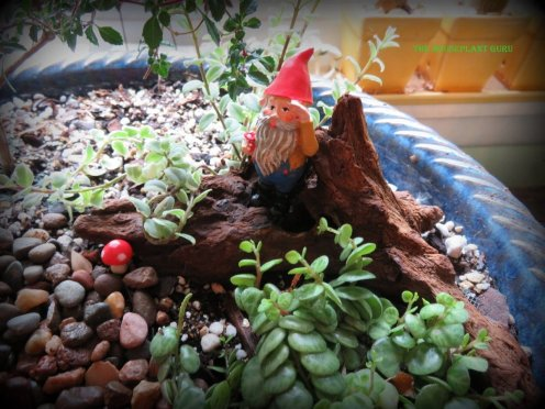 Love that gnome!