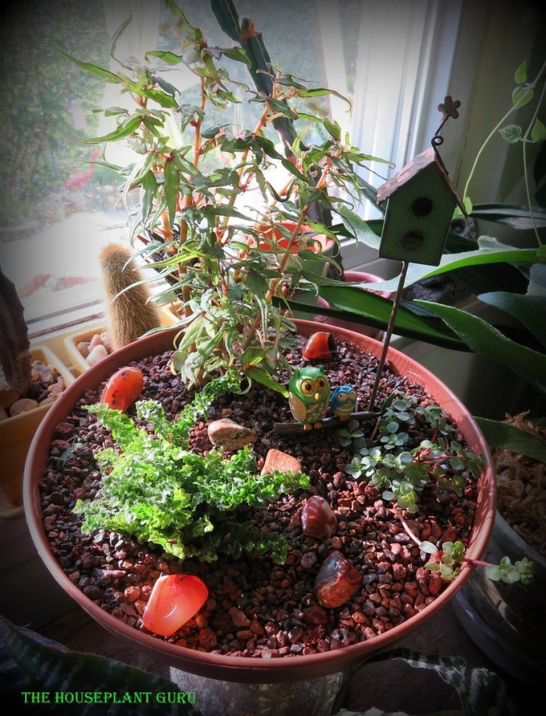 My miniature garden made with mini houseplants