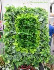 LIving Wall at Cultivate '16