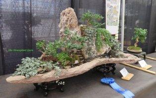 A whole bonsai garden