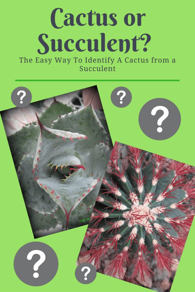 Cactus or Succulent?