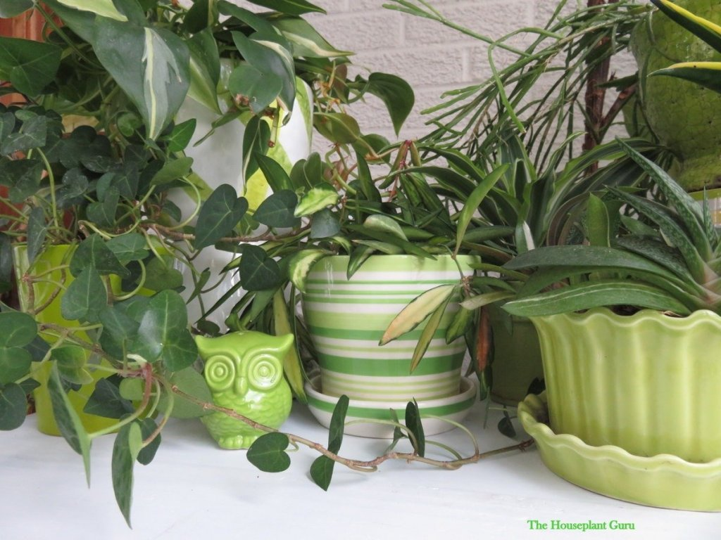 Green is my color for pots for my plants