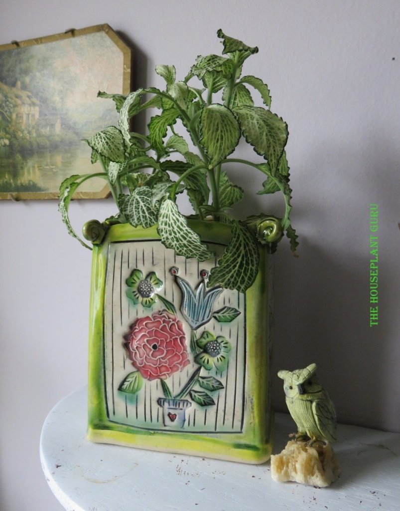 Handmade pottery containing a fittonia