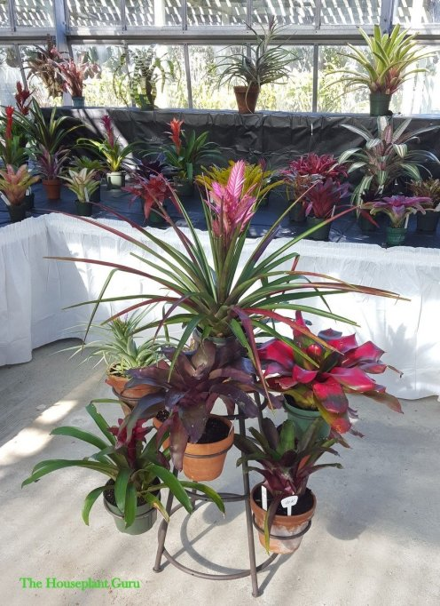 Display of bromeliads 2015