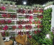 Wall of bromeliads at the Tropical Plant Industry Exhibition