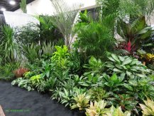 Houseplants everywhere at the Tropical Plant Industry Exhibition