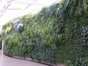 Living wall at Longwood gardens in PA