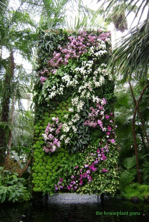 Living wall at orchid show at the New York Botanical Garden