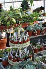 Plants displayed for sale