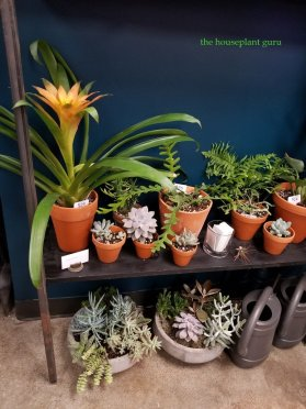 Succulents and watering cans