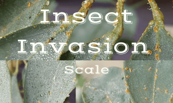 Insect Invasion : Part 2 Scale