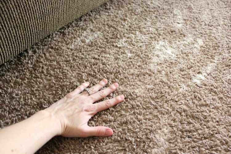 Removing vomit out of carpet