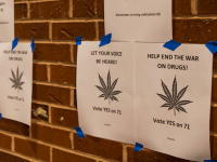 FILE PHOTO: DANIEL SMITH/THE HOYA Marijuana-related arrests in D.C. are down 99.2 percent from last year following the November 2014 passage of Initiative 71, which legalized the possession, growth and use of marijuana. According to the MPD, there have been seven arrests this year, compared with 895 in 2014.