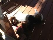 Puppy sun dial