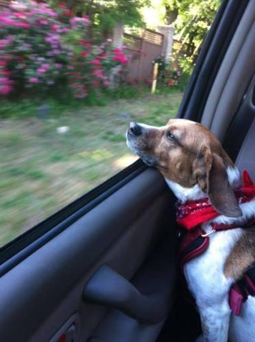 Jasmine Enjoying a Fall Car Ride