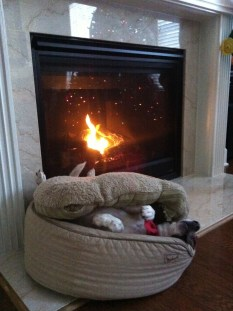 Buried under her pillow by the fire