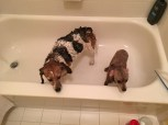 Cousin Tink at Karens getting bathed