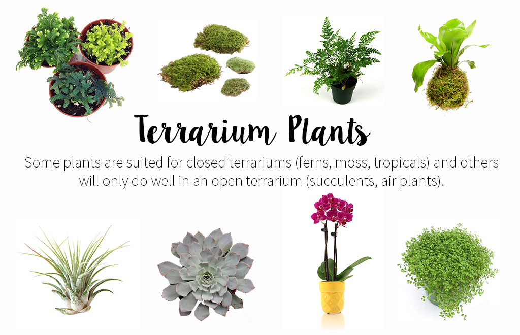 What plants do well in a terrarium? Here are some to start with.