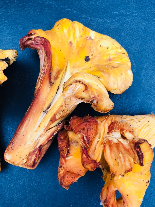 How to Cook Chanterelle Mushrooms - The Hungry Mouse