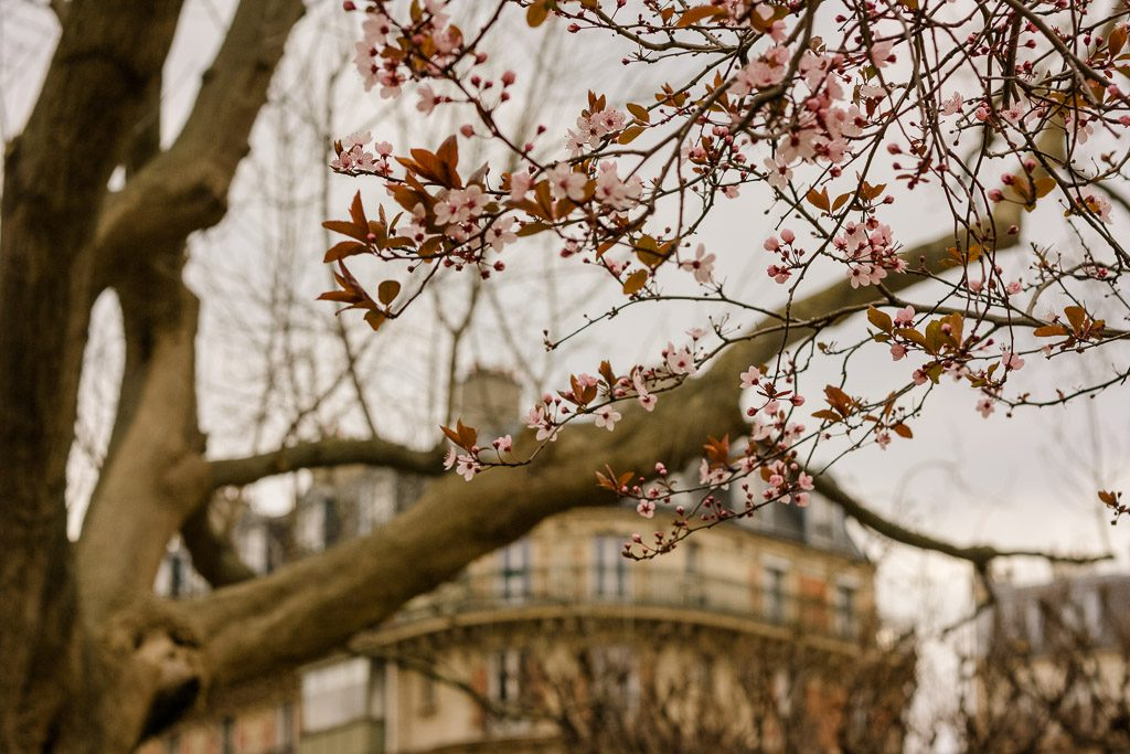Blossoms - Paris Wellness Travel Guide