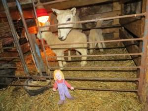 lambs under heat lamps