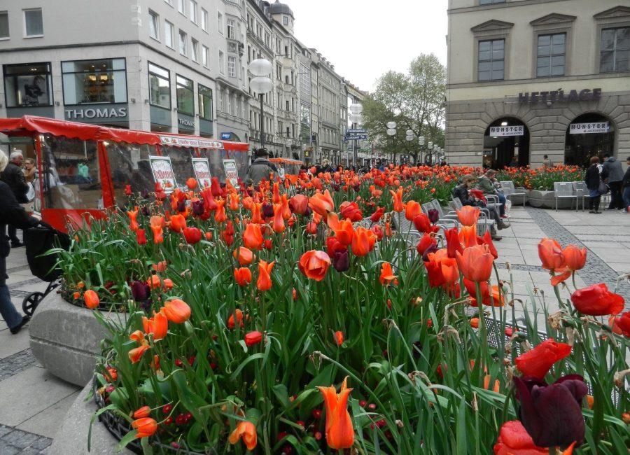 munich-tulips