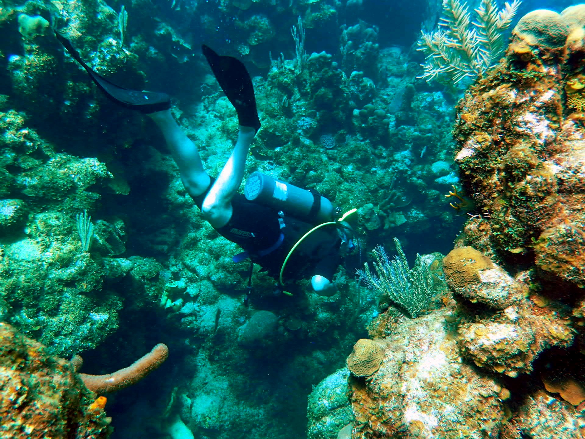 Top Scuba Dive Sites in Roatan