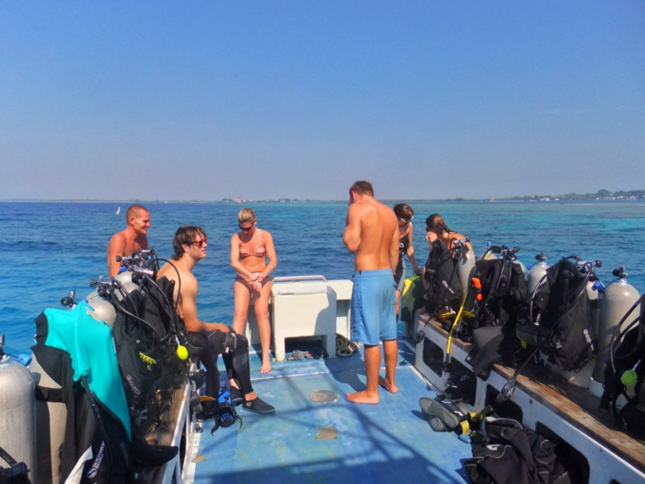 Whale Sharks In Utila