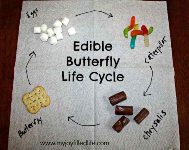 Edible-Butterfly-Life-Cycle-