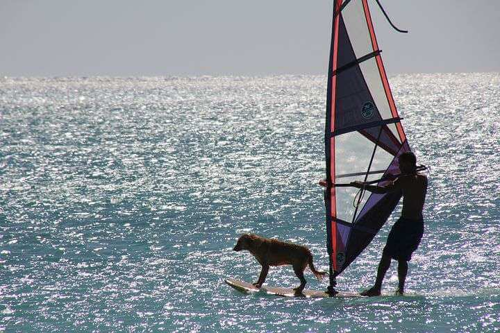 Surf with a dog