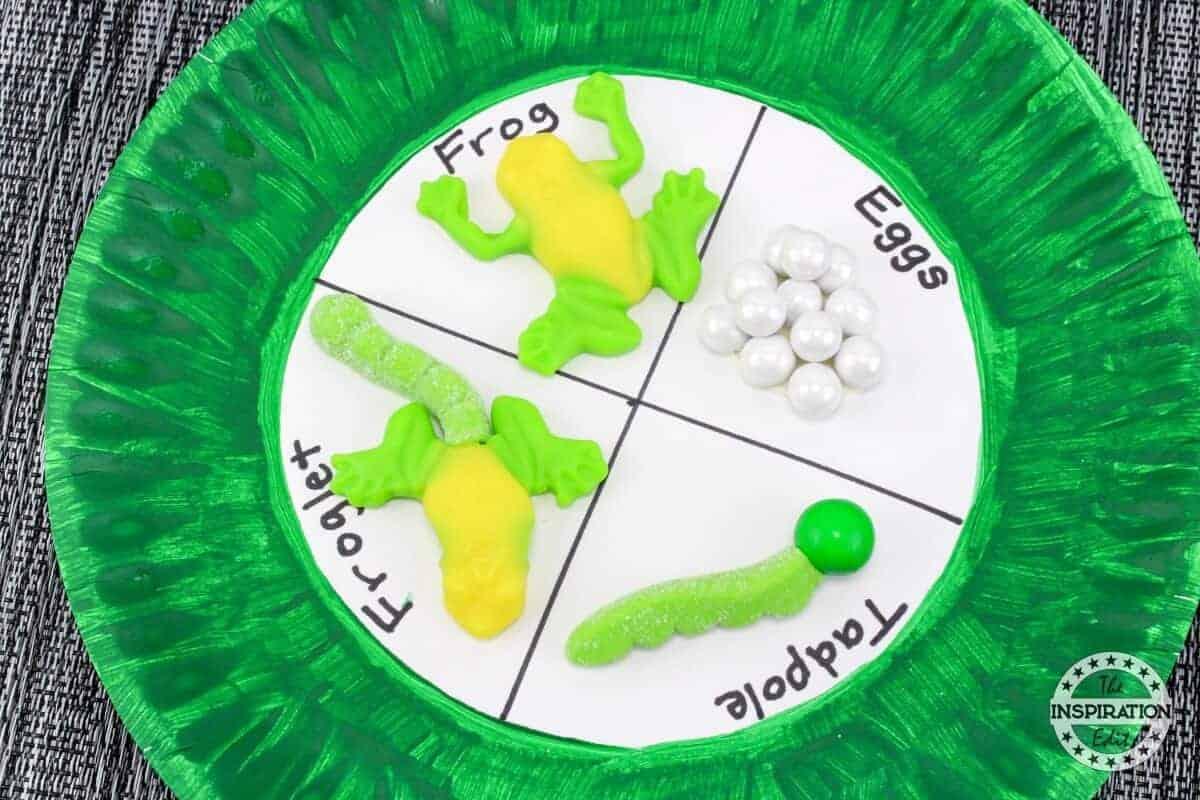 Frog Craft Activity Preschool