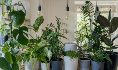 The Power of Plants 4 Wellness Benefits of Green Scenery