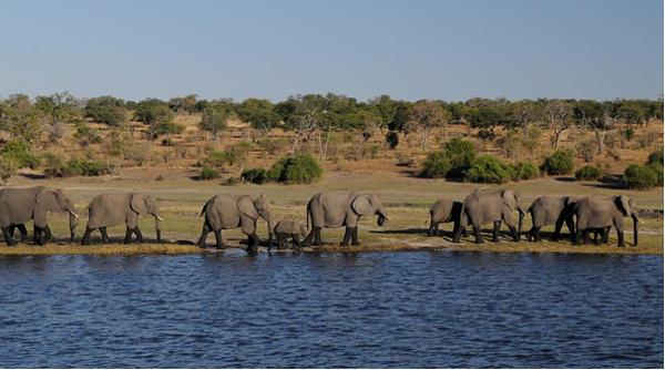 elephants at waterside - https://pixabay.com/en/elephant-africa-river-botswana-1653016/