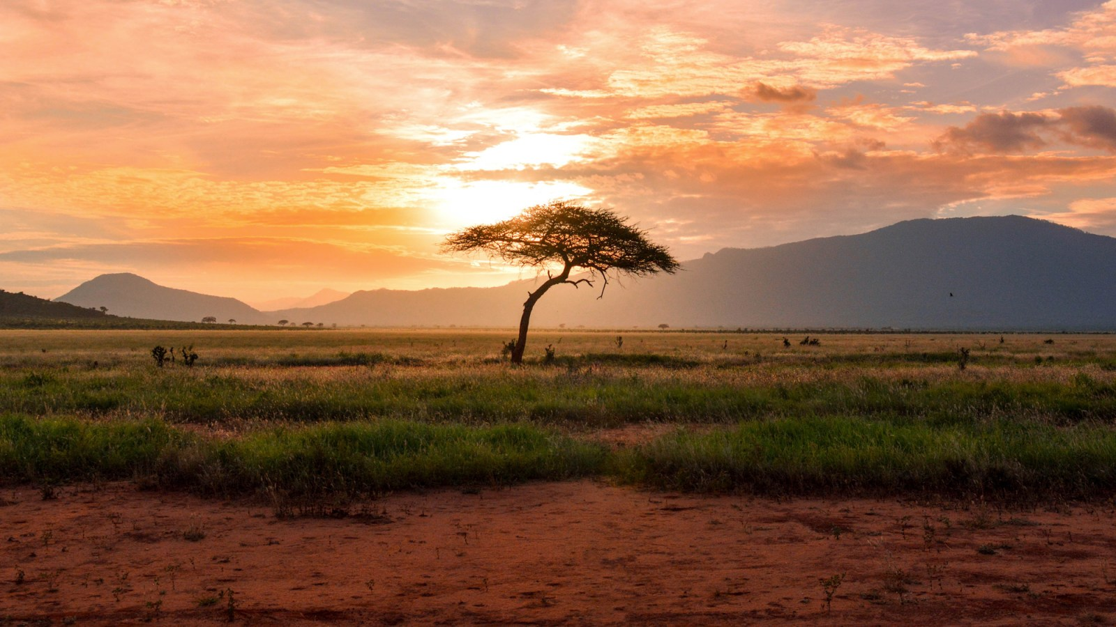 Image from Africa
