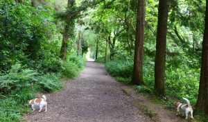Woodland Walk at Ballysaggartmore Towers - The Irish Place