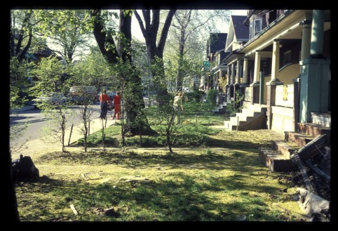 front yards on Heward Ave (3)