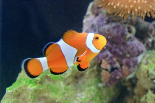 Don't call me Nemo!