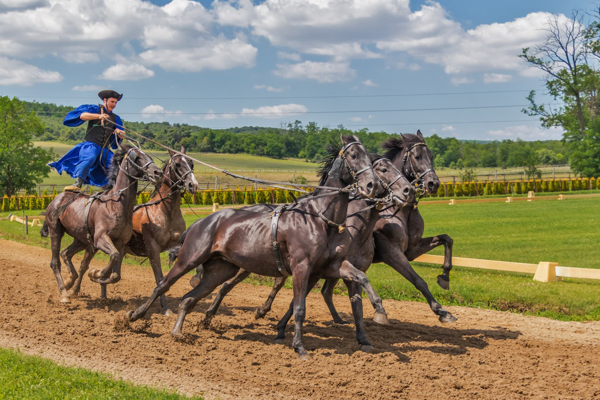 horses-394205